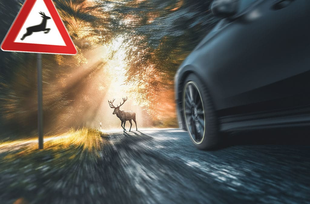 Safety Tips for Driving During Deer Season