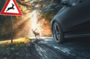 Image of car speeding car approaching a deer crossing the road